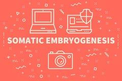 Begreppsmässig affärsillustration med den somatiska embryogen för ord royaltyfri illustrationer