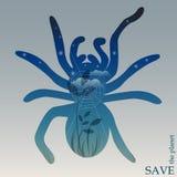 Begreppsmässig illustration på temat av skydd av naturen och djur med nattskogen med rengöringsduk i kontur av spindeln Arkivbilder