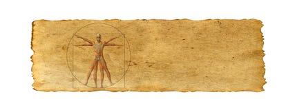Begreppsmässig vitruvian människokroppteckning på gammal pappers- bakgrund arkivfoton