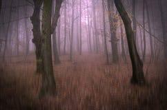 Begreppsmässigt foto från den fantastiska drömlika skogvägen som täckas med mist Arkivfoton