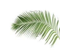 Begreppssommar med den gröna palmbladet från tropiskt blom- ormbunksblad arkivfoto