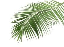 Begreppssommar med den gröna palmbladet från tropiskt blom- ormbunksblad royaltyfri fotografi