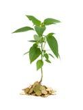 begreppstillväxtpengar Royaltyfria Foton