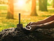 Begrifflich von der Hand, die Baumsamen auf schmutzigem Boden gegen Galan pflanzt Stockfotografie