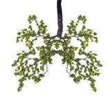 Begriffsbild des grünen Baums formte wie menschliches Lungeisolat O Stockbilder
