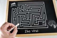 Begriffsdiagramm gezeichnet mit Kreide auf einem Tafelgrün von Zica-Virus ZIKV lizenzfreie stockbilder