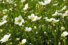 begrundande för skönhetnaturinspiration vilar den gröna linjen för verklig för verklighetvårsommar för flora för växter för liv f Royaltyfria Bilder