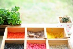 Behälter des bunten Kornes für Blumentopf mit Kaktus und papermint PO Stockfotografie