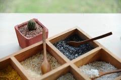 Behälter des bunten Kornes für Blumentopf mit Kaktustopf Lizenzfreies Stockfoto