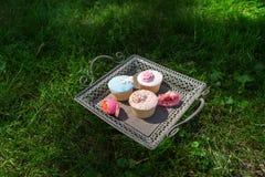 Behälter von den kleinen Kuchen, die auf dem Rasen stehen Lizenzfreies Stockbild