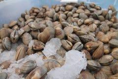 Behälter von Muscheln am Landwirtmarkt Stockbilder