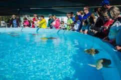 Behållare för havssköldpadda - maraton, Florida arkivbild