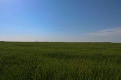 Behållare och fältshelterbelts Arkivbilder