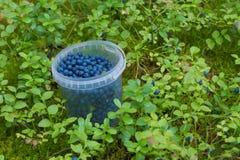 Behållaren med blåbäret Royaltyfria Bilder