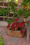 behållareträdgård Royaltyfri Fotografi