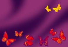 behagfull fjäril Royaltyfri Bild