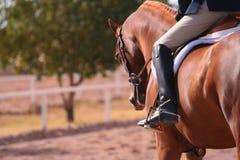 behagfull häst Arkivfoton
