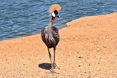 behagfull storartad plumage för fågel royaltyfri fotografi