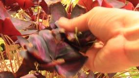 Behandel installaties en bloemen in de tuin stock footage