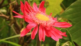 Behandel installaties en bloemen in de tuin stock videobeelden