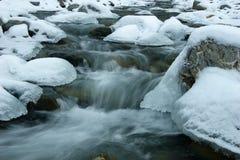 Behandeld met sneeuw en ijs maar nog levend Stock Foto