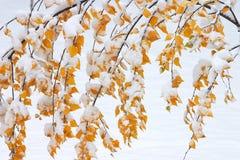 Behandeld in sneeuw stock afbeeldingen