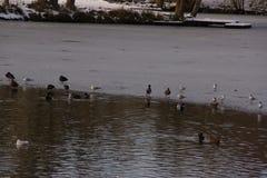Behandeld in vorstmeer en sneeuw - Vijver van de Stomme in de stad van Elancourt in Frankrijk stock afbeelding