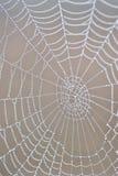 Behandelde dauw spiderweb royalty-vrije stock foto