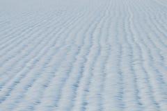 Behandelde de sneeuw van het korrelgebied Het gebied van de landbouw onder sneeuw stock afbeelding