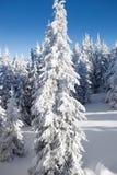 Behandelde sneeuw Stock Foto