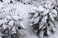 Behandelde sneeuw Royalty-vrije Stock Foto's