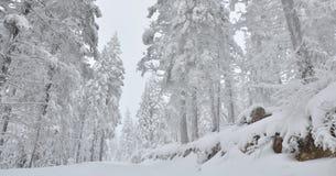 Behandelde sneeuw de boswinter Stock Afbeeldingen