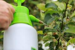 Behandeling van installaties van insecten Stock Fotografie