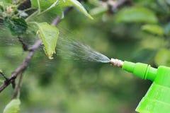 Behandeling van installaties van insecten Stock Afbeeldingen