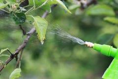 Behandeling van installaties van insecten Stock Foto's