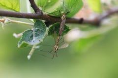 Behandeling van installaties van insecten Royalty-vrije Stock Foto's