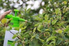 Behandeling van installaties van insecten Royalty-vrije Stock Fotografie