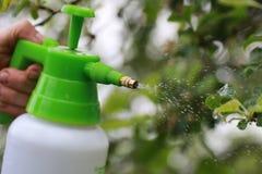 Behandeling van installaties van insecten Royalty-vrije Stock Foto