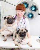 Behandeln Sie das Umarmen von zwei Hunden in einer Veterinärklinik Lizenzfreie Stockfotografie