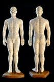 behandla med akupunktur modellen Arkivfoton