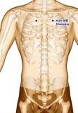 Behandla med akupunktur punkt som drar KI25 Shencang, illustrationen 3D Royaltyfri Bild