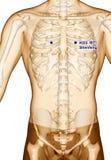 Behandla med akupunktur punkt som drar KI23 Shenfeng, illustrationen 3D Arkivfoton