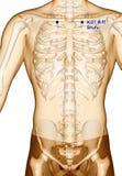 Behandla med akupunktur punkt som drar KI27 Shufu, illustrationen 3D Arkivbild