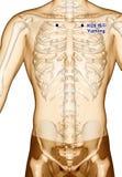 Behandla med akupunktur punkt som drar KI26 Yuzhong, illustrationen 3D Arkivfoto