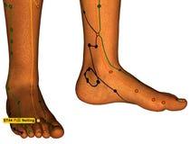 Behandla med akupunktur punkt ST44 Neiting, 3D illustrationen, vita Backgroun Royaltyfri Fotografi