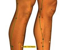 Behandla med akupunktur punkt ST39 Xiajuxu, 3D illustrationen, vita Backgroun Royaltyfri Bild