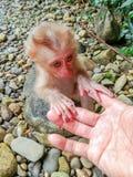 Behandla som ett barn apan, den vänd tjusade som skogen sattes med en handskakning Royaltyfri Bild