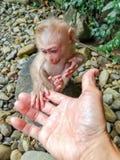 Behandla som ett barn apan, den vänd tjusade som skogen sattes med en handskakning Arkivbild