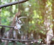 Behandla som ett barn apan som hänger på trädet Royaltyfri Fotografi