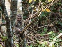 Behandla som ett barn apan i en skog Royaltyfria Foton